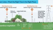 Just in Time for California Arbor Week, PG&E Offers New Safety Resource to Help Customers Plant the Right Tree in the Right Place