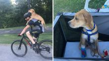 Cyclist gives injured stray dog piggyback to vet