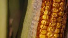 JBS importa mais milho da Argentina diante de alta no frete rodoviário, diz fonte