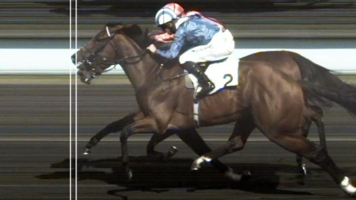 'So confused': Extraordinary optical illusion baffles horse racing world