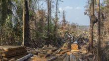 Organizações pedem ao BNDES liberação de recursos do Fundo Amazônia