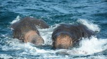 Sri Lanka navy rescues two elephants washed out to sea