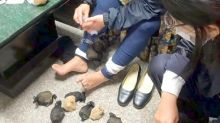 Taiwanese woman caught smuggling 24 gerbils strapped to legs