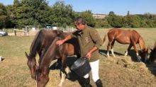Cavalli uccisi e mutilati: casi di stregoneria?