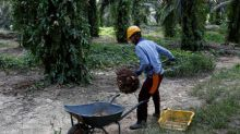 Malaysia says EU palm oil curbs lack scientific proof, breach WTO rules