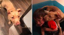 WATCH: Little boy's heartwarming reunion with lost puppy