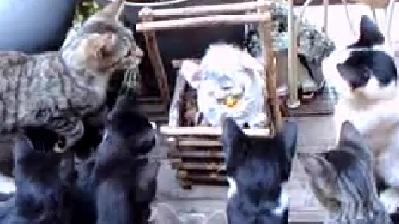 Curious Kittens Investigate Furby Toy