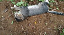 This heartbroken cat refused to leave her dead owner's grave for a YEAR