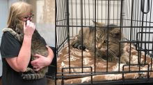 Cat missing for 11 years reunited with owner in New York