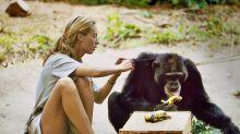 Jane Goodall: « Ensemble, on peut déplacer des montagnes »