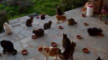 Buscan empleado para cuidar 55 gatos en una paradisíaca isla griega
