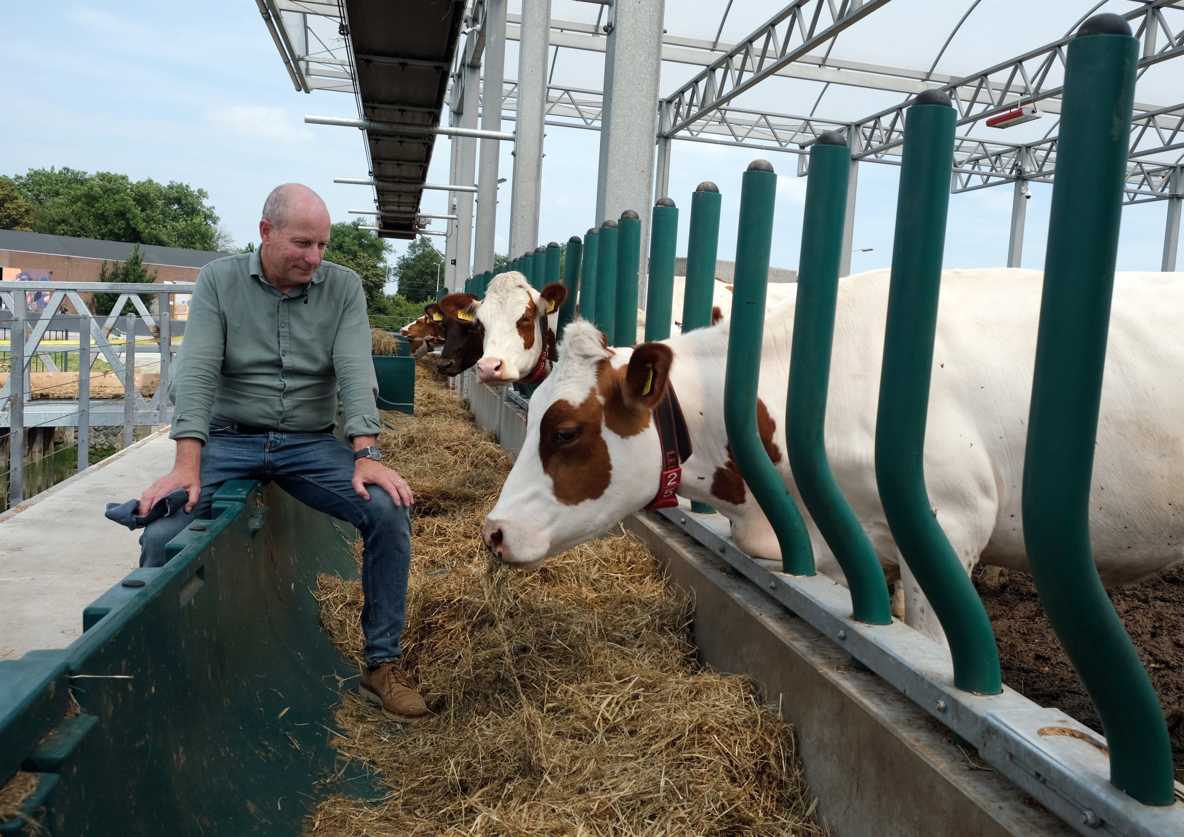 In this photo taken Monday, June 24, 2019, Peter van Wingerden poses with his herd aboard a futuristic three-storey floating dairy farm moored in Rotterdam harbour, Netherlands. The floating dairy farm has one robot that milks the cows, another that automatically scoops up the manure, and a roof designed to collect rain water, along with using waste products from local industry to make it a sustainable inner-city producer of dairy foods aimed at feeding future generations of city dwellers according to the small holding farmer Peter van Wingerden.(AP Photo/Mike Corder)