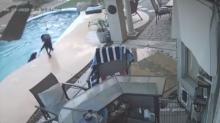 Cachorro herói salva amigo de afogamento em piscina