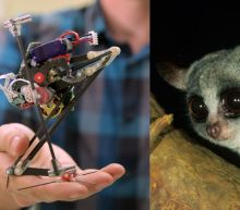 Adobrable bush baby inspires super-jumping robot