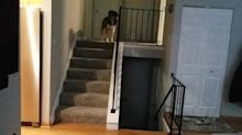 Athletic Collie catches trick shot pass from owner