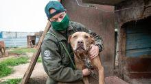 South Korea starts to close dog meat farms as attitudes change