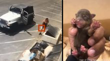 Video catches woman tossing 7 newborn puppies into Coachella dumpster in 90-degree weather