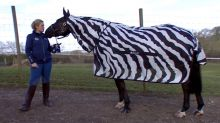 Why is this horse dressed like a zebra?