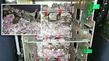 Rats eat through $25,000 of cash inside ATM