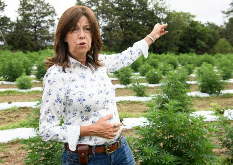Farmer Susan Corbett has installed security cameras to watch over her hemp crop in rural Virginia after it was targeted by thieves