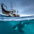 TV Review: 'Planet Earth: Blue Planet II' on BBC America