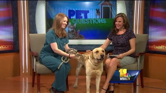 Pet Questions with Dr. Emily Reger