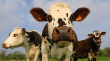 What is the science behind the moo-ve from cattle methane emissions?