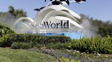 SeaWorld eliminating 125 positions, despite attendance jump