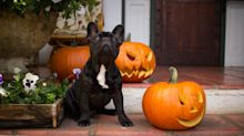 No tricks here! Get your pup or kitty in the Halloween spirit with 30 percent off treats on Amazon
