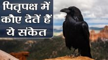 Know the importance & significance of Crow in Pitru Paksha