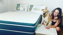 Dona do 'destruidor' cão Chico ganha colchões novos e ela não poderia estar mais feliz!