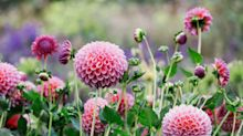 10 essential plants to buy now from your local garden centre