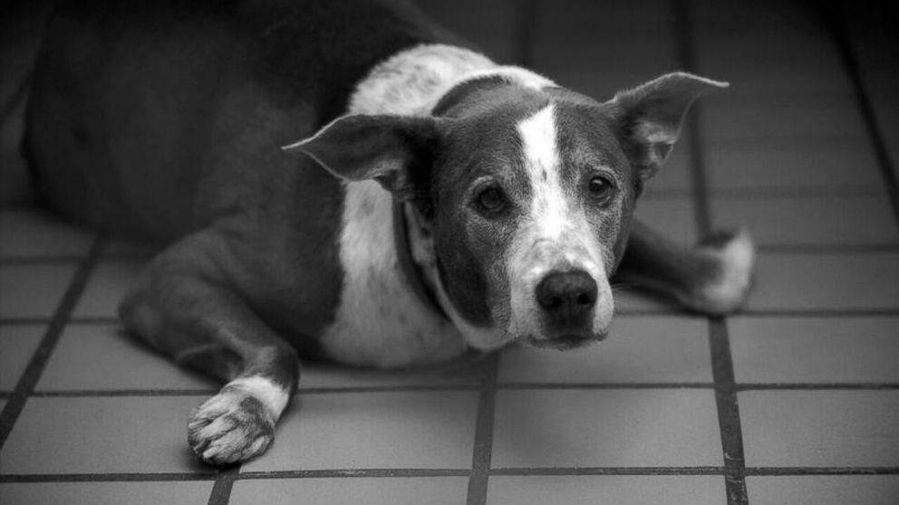 letter from dog to owner owner s heartbreaking letter inspires elderly s 43019