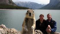The Greatest Animal Photobombs Of All Time