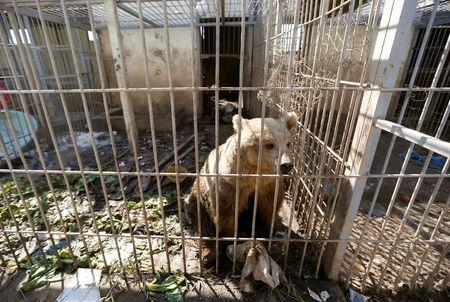 A bear is seen in the cage of Nour Park at Mosul's zoo, Iraq, February 2, 2017. REUTERS/Muhammad Hamed