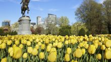 How to do Boston like a local