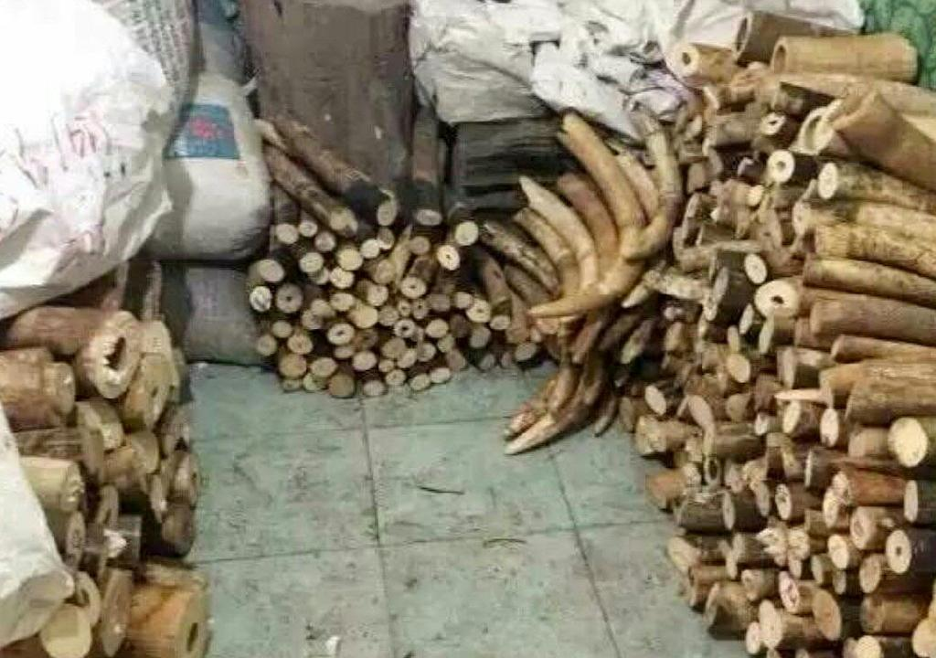 The Wildlife Justice Commission found products such as endangered rhino horn and identified 51 people involved in the illegal trade in Nhi Khe on November 8, 2016 (AFP Photo/)