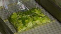 Bagged Salad Linked to Mystery Stomach Bug