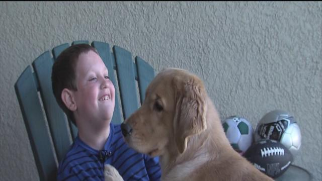 Golden retriever 'Victory' is more than a pet for Brandon family