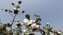 Coronavirus undermines Indian crop prices, derails rural rebound
