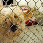 South Korean farmer prosecuted for killing dogs for meat in 'landmark case'