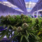 10 Marijuana Stocks for the Canadian 'Pot Rush'