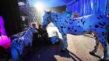 Paris vote la fin des spectacles d'animaux sauvages dans les cirques dès 2020