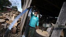 Brazil police arrest dozens in illegal Amazon rainforest logging ring