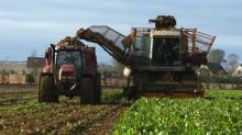 Cinq questions sur les néonicotinoïdes, ces insecticides interdits depuis 2018 et réautorisés pour 2021 par le gouvernement