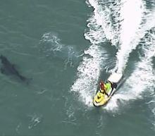 10-foot great white shark kills surfer in Australia