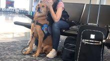 Vídeo mostra momento em que cão protege a dona de ataque de pânico