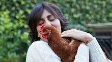 The CDC Is Warning People Not to Snuggle with Their Backyard Chickens