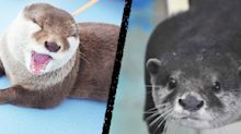 These otterly adorable animals are 'participating' in beauty contests
