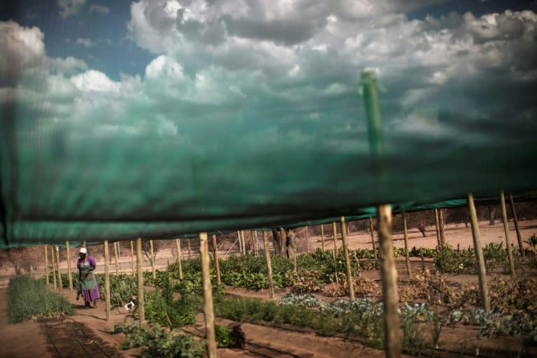 It's an 'emotive topic' for Namibians (AFP Photo/GIANLUIGI GUERCIA)